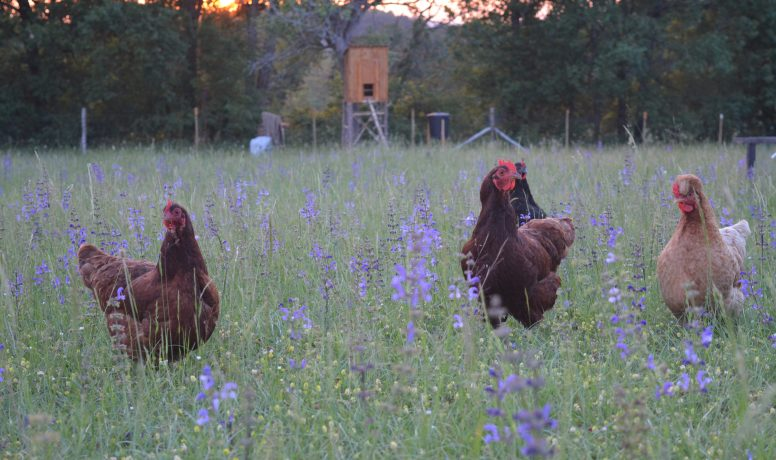 Beautiful Birds at Perigord Retreats