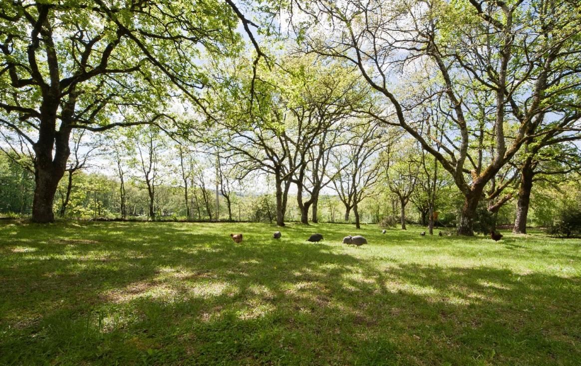 Oak trees and guinea fowl