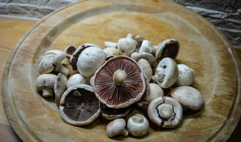 Mushrooms of the Dordogne