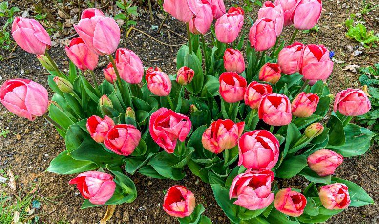 Perigord Retreats in spring